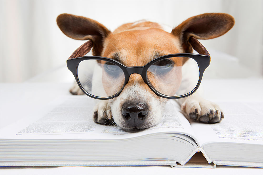 dog with glasses laying on book