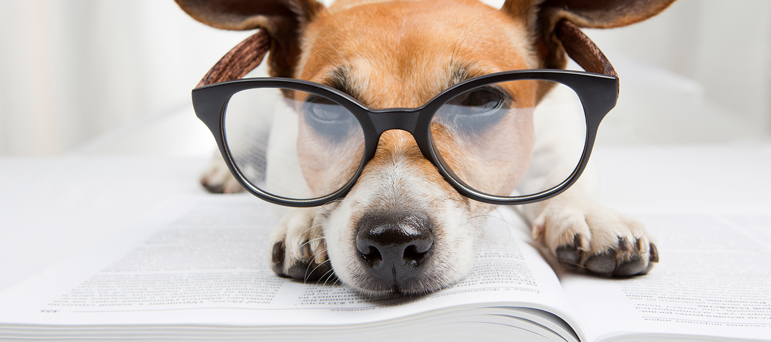 Dog with Glasses on Book