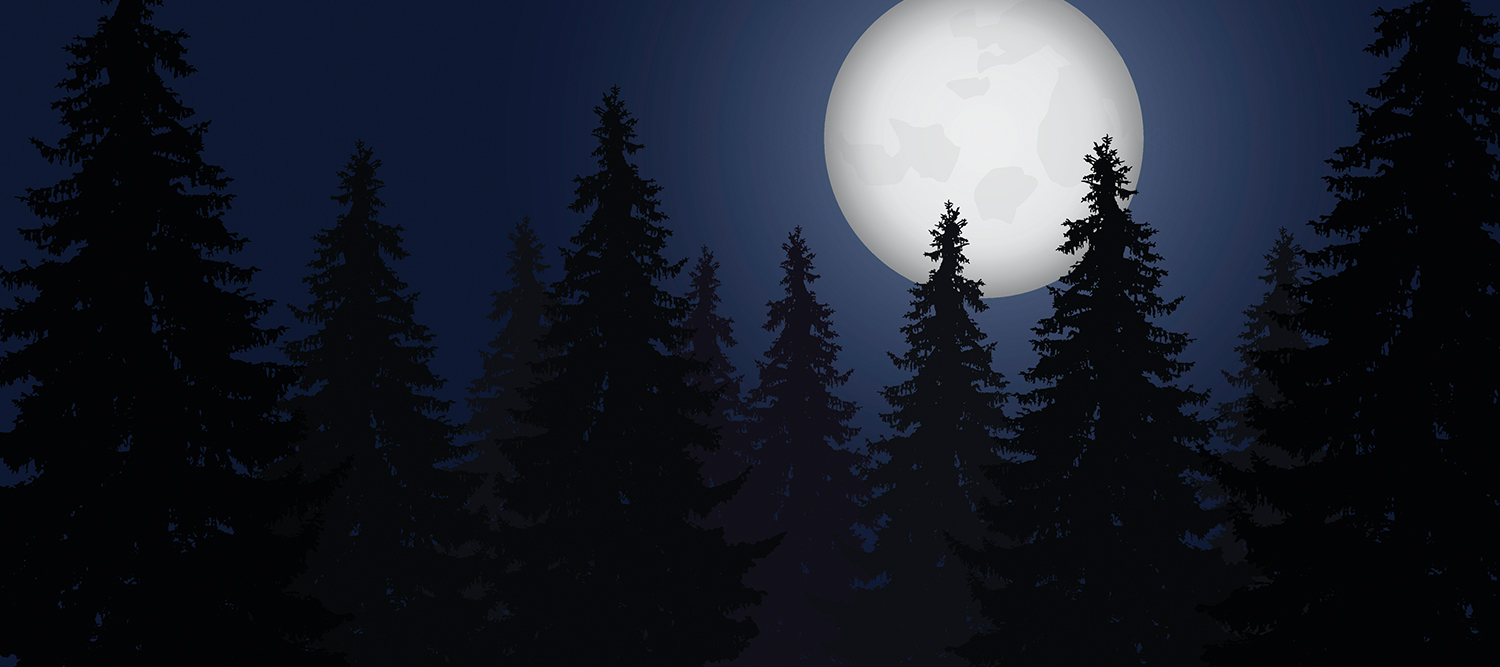 Picture of trees in the moonlight.